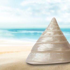 sea-snail-345678_960x640