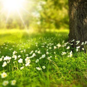 spring-276014_960