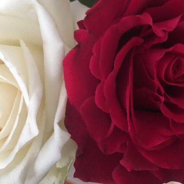 roos rood en wit2 960x640