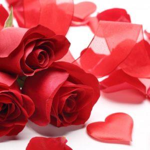 roses-2013498_960x640